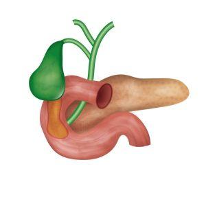 hormone health image